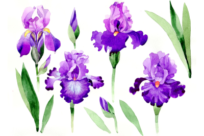 Cool purple irises PNG watercolor set