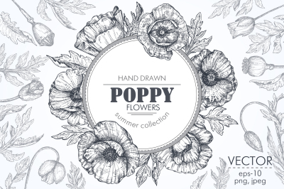 Vector poppy flowers set