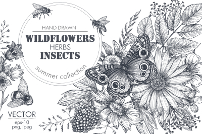 Vector insects and wildflowes set