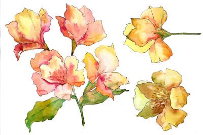 Yellow alstroemeria flower PNG watercolor set