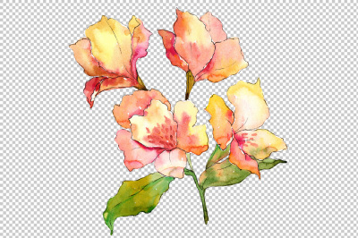 Yellow alstroemeria flower PNG watercolor set