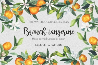 Branch tangerine - watercolor set