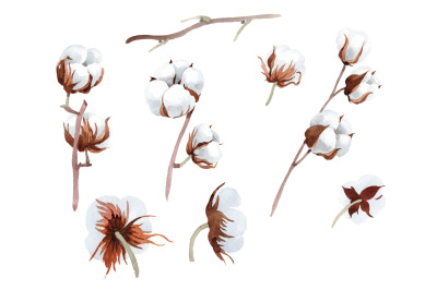 Cotton soft flower PNG watercolor set