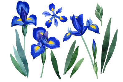 Cool blue irises PNG watercolor set