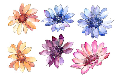 Colorful african marguerite PNG watercolor set