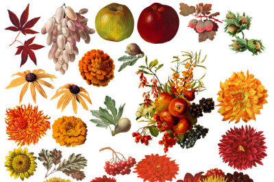 Fall Clipart, Vintage Botanical Digital Graphics