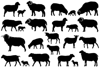 Silhouettes of sheeps