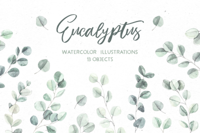 Eucalyptus. Watercolor illustrations