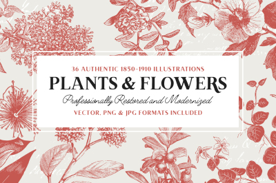 36 Plant & Flower Illustrations
