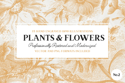 35 Plant & Flower Illustrations No.2