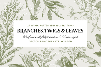29 Branches, Twigs, & Leaves