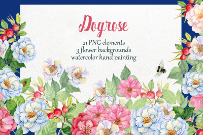 dogrose. watercolor hand painting