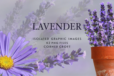 Lavender clipart, isolated lavender images