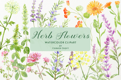 Herb flower collection