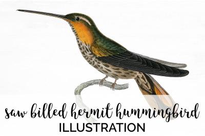 Hummingbird Clipart Vintage