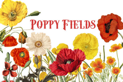 Vintage Poppies watercolor flower clipart