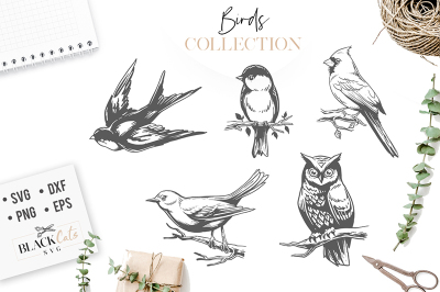 Birds set - SVG Birds
