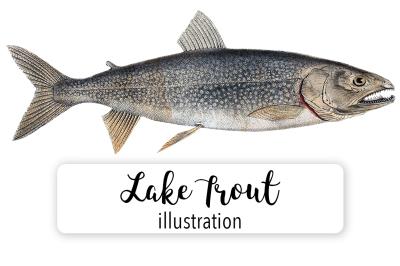 Fish: Lake Trout