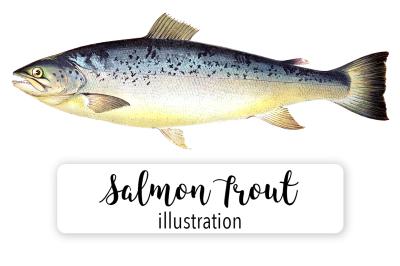 Fish: Salmon Trout