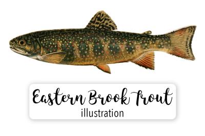 Fish: Vintage Eastern Brook Trout
