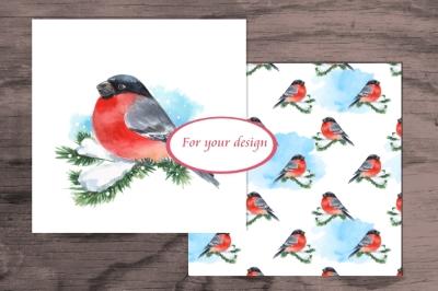 Bullfinch. Watercolor set