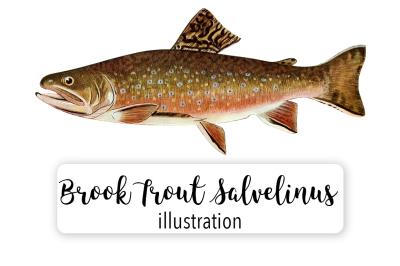 Fish: Vintage Adult Male Brook Trout Salvelinus-Fontinalis