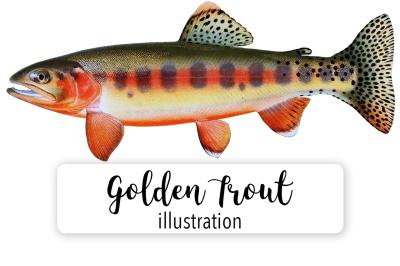 Fish: Vintage Golden Trout