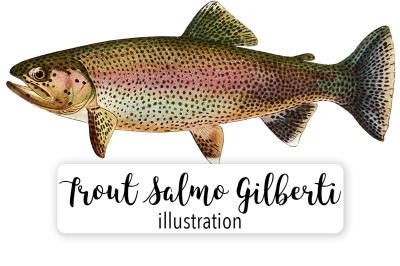 Fish: Vintage Adult Male Golden Trout Salmo Gilberti