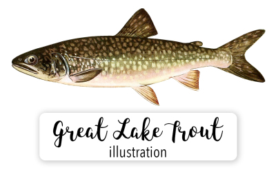 Fish: Vintage Adult Male Great Lake Trout