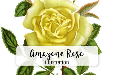 Flowers: Vintage Yellow Amazone Rose