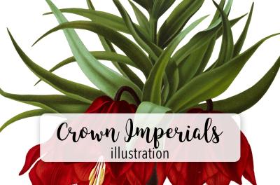 Flowers: Vintage Red Crown Imperials