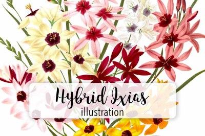 Flowers: Vintage Hybrid Ixias