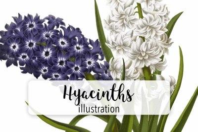 Flowers: Vintage Purple and White Hyacinths