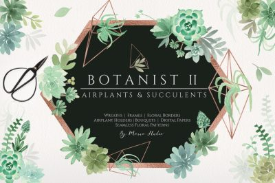 Botanist II - Airplants & Succulents Greenery Florals