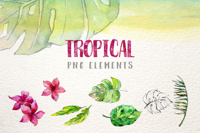Tropical leaves collection PNG watercolor set