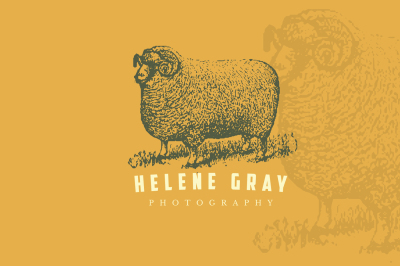 Sheep vintage logo + business card