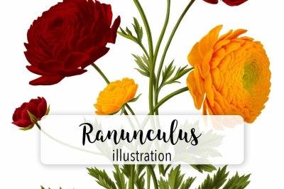 Florals: Vintage Red and Orange Ranunculus
