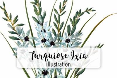 Flowers: Vintage Turquiose Ixia