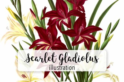 Flowers: Vintage White and Scarlet Gladiolus