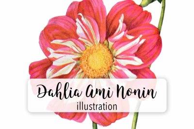 Flowers: Vintage Dahlia Ami Nonin