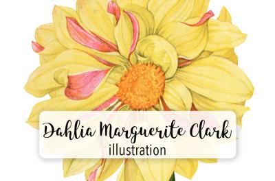 Flowers: Vintage Dahlia Marguerite Clark