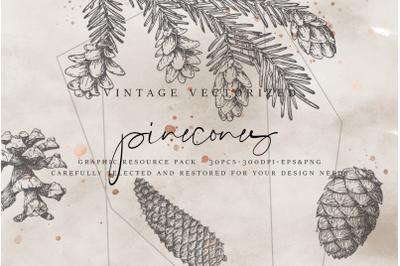 VintageVectorized - Pinecones Clipart