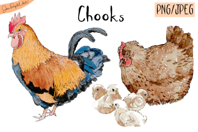 Watercolor Chooks | Watercolor Clip art| PNG/JPEG