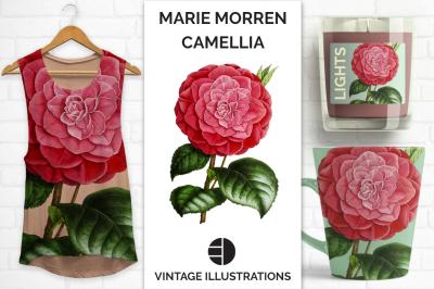 Watercolor Floral Marie Morren Camellia