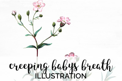 Babys Breath Clipart