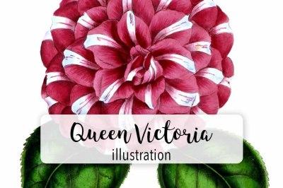 Vintage Watercolor Queen Victoria Camellia