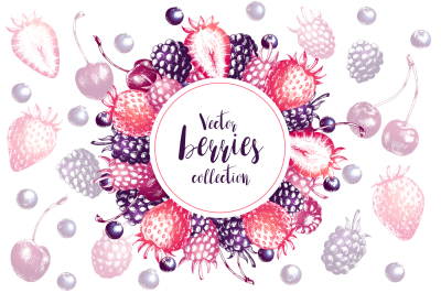 Vector berries collection