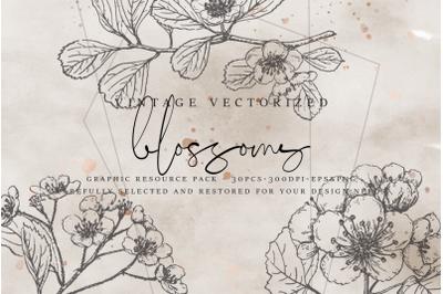 VintageVectorized - Blossoms Clipart