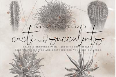 VintageVectorized - Succulents Clipart