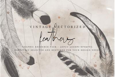 VintageVectorized - Feathers Clipart